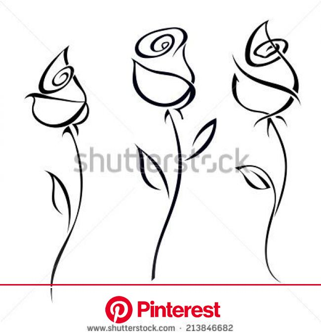 Rose blossoms isolated on white background. Vector illustration. | Roses drawing, Line art drawings, Flower drawing